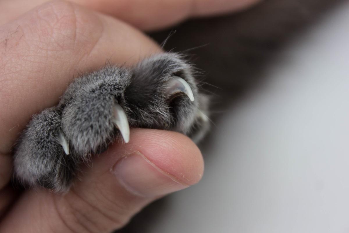 unghie gatti