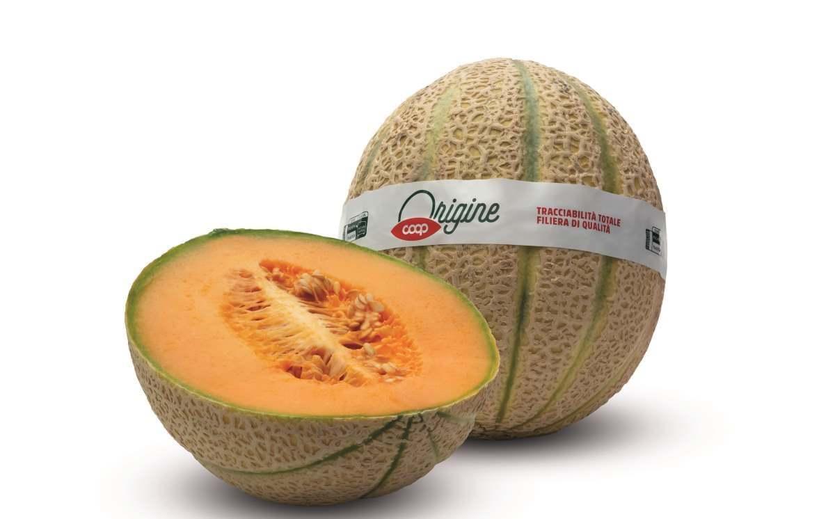 Meloni coop