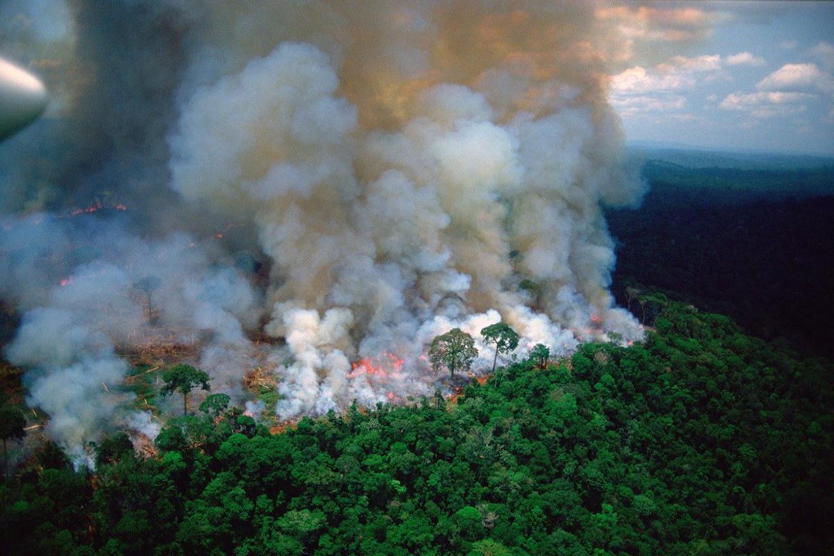 Incendi foresta amazzonica