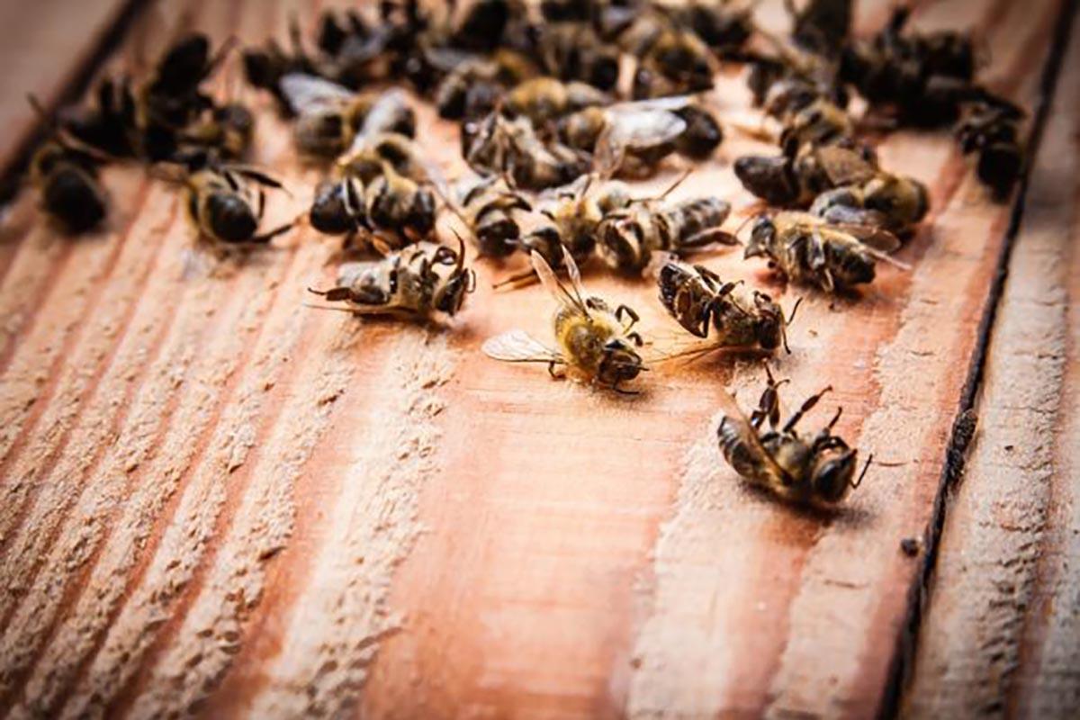 api-moria-pesticidi
