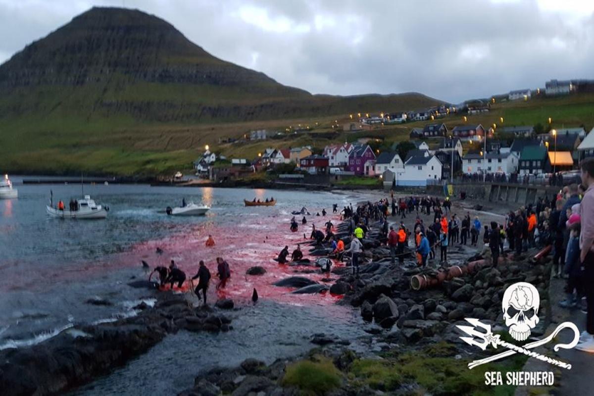 Caccia balene