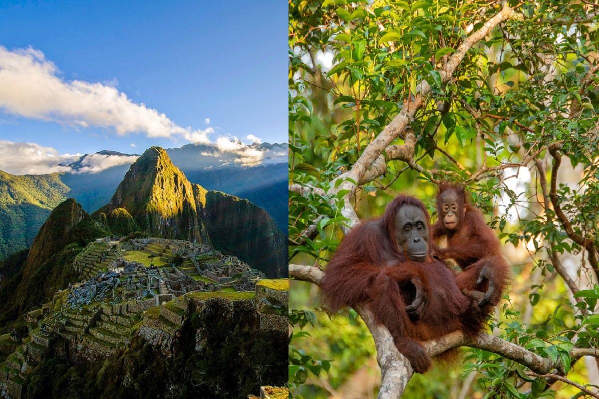 Deforestazione Perù