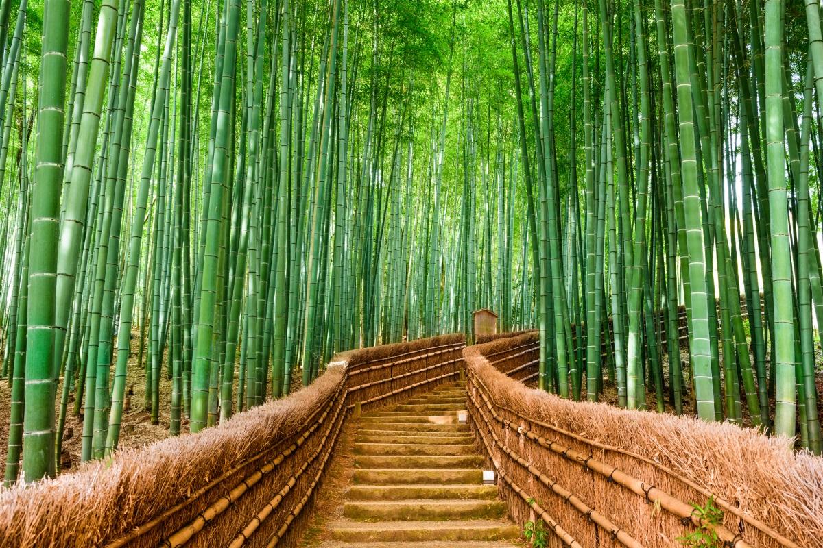 Leggenda giapponese del bambù