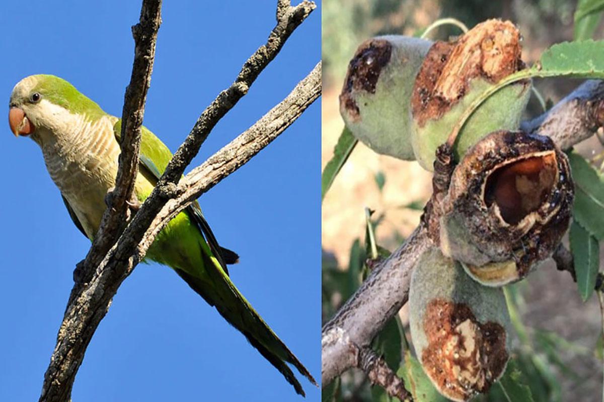 pappagalli-puglia