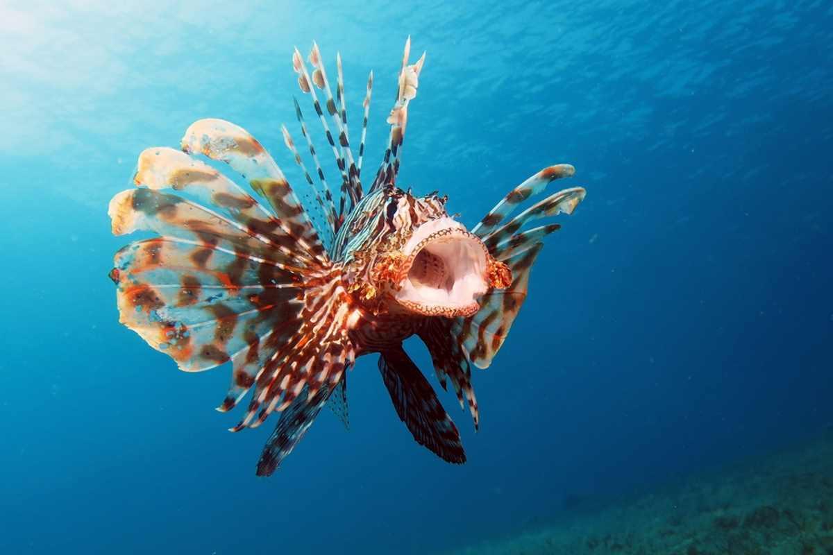 pesce-scorpione-mare