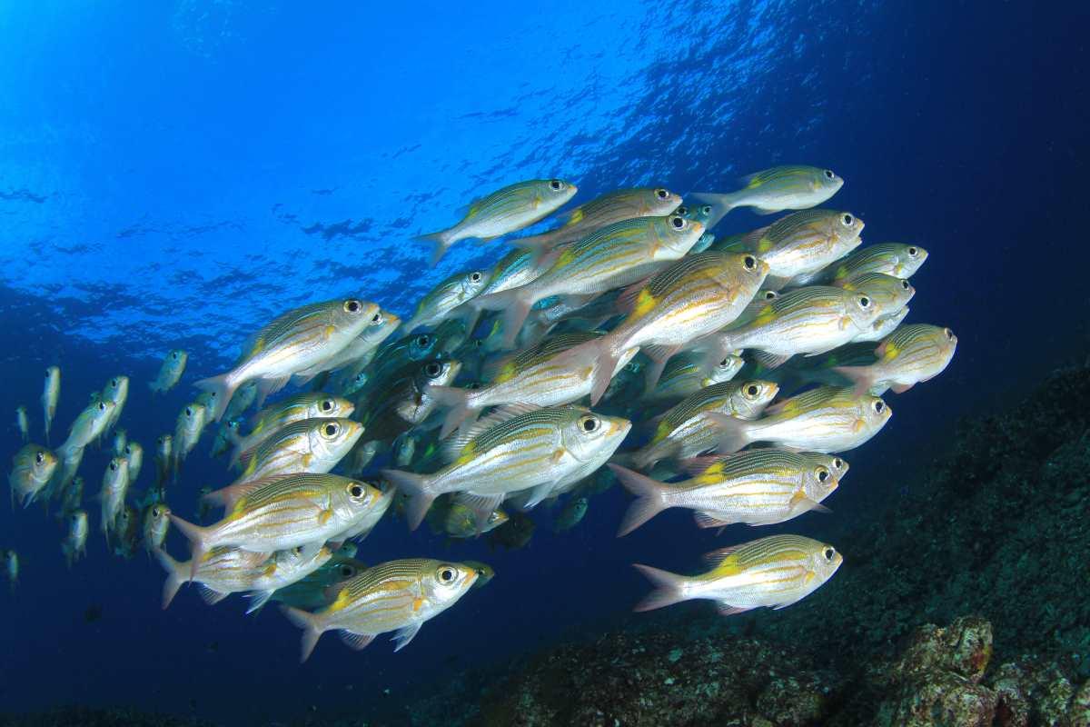 banchi di pesce