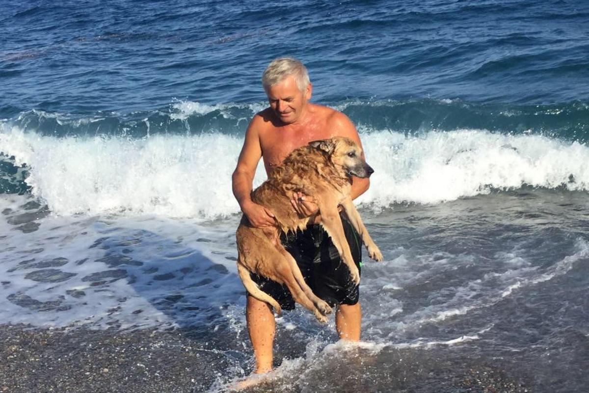 Lazzaro cane paralizzato