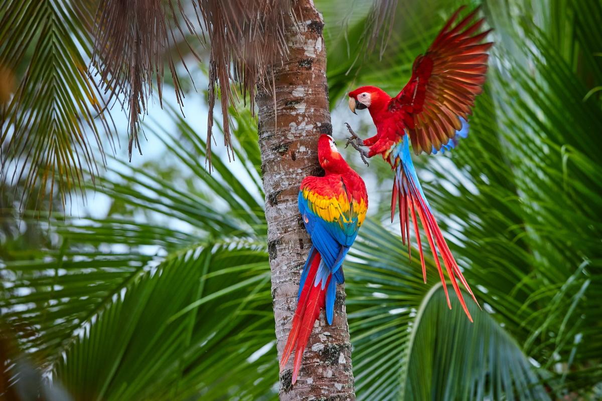 Minacciati dagli incendi gli animali in Amazzonia