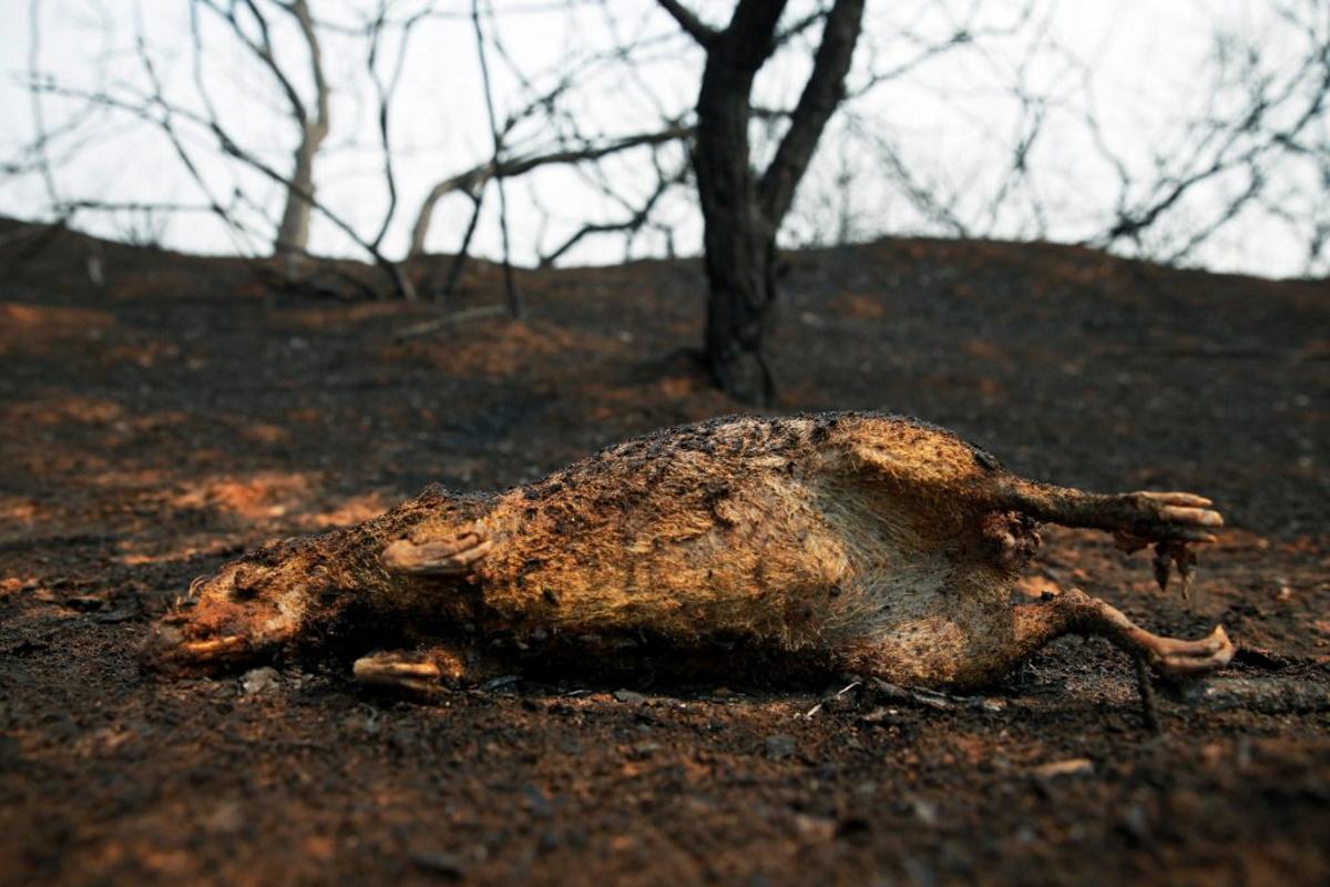 Animali morti negli incendi in Bolivia