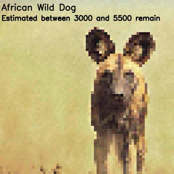 Animali in estinzione