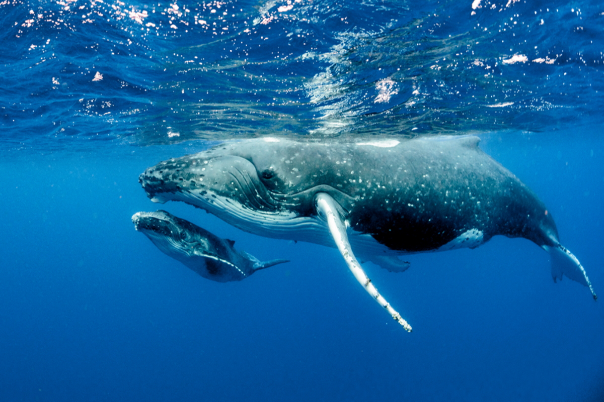 balene inquinamento