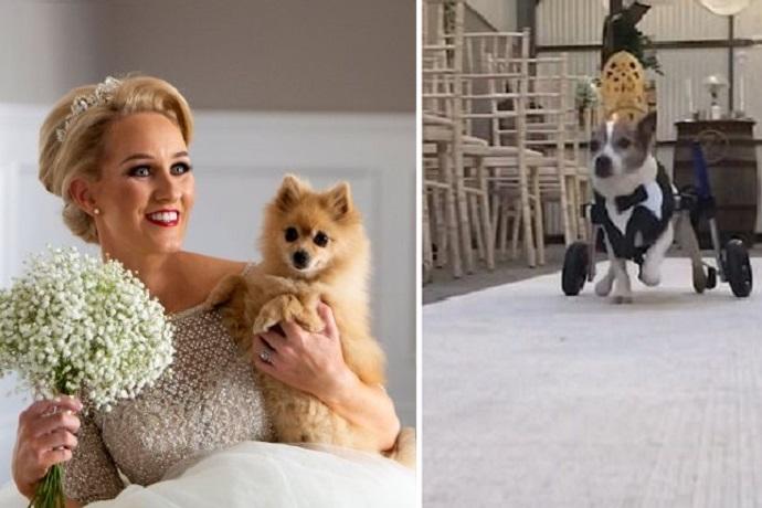 Matrimonio con cani