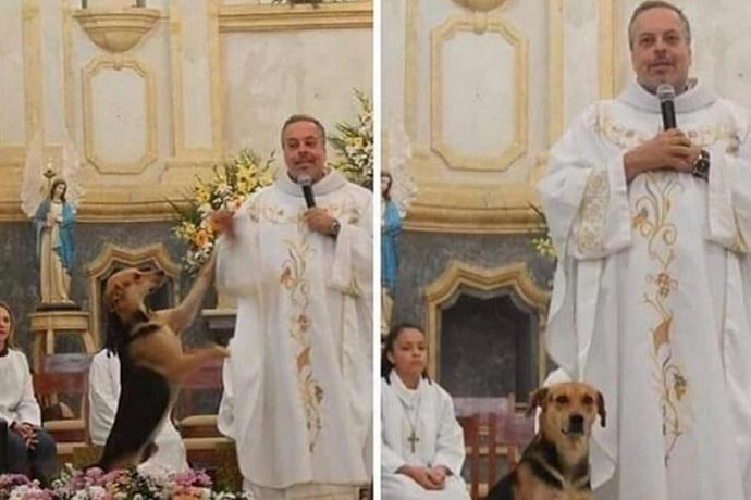 Cani a messa