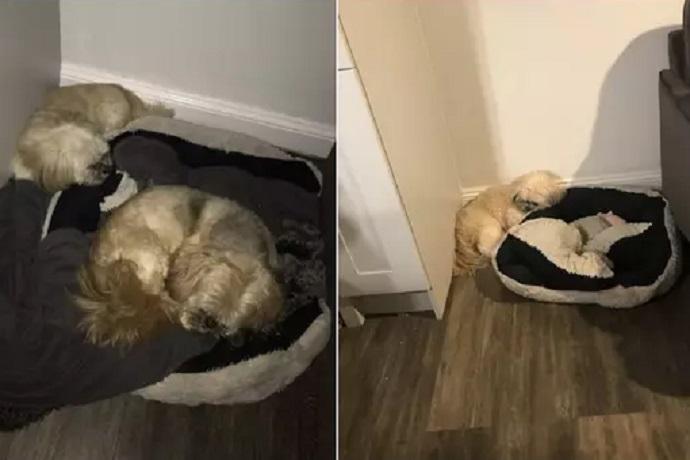Cani inseparabili anche dopo la morte