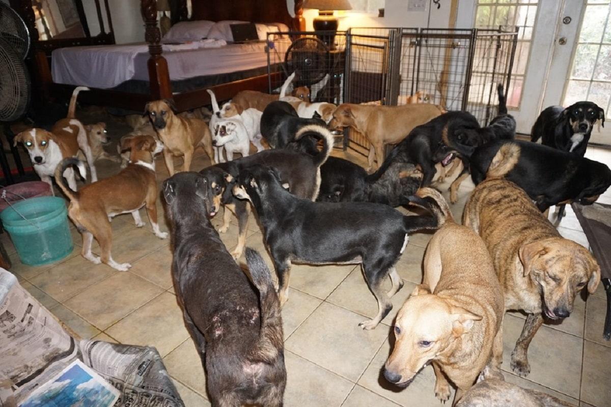 Cani salvati dall'uragano