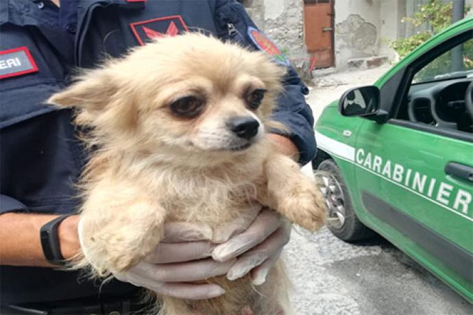 Chihuahua maltrattati Salerno