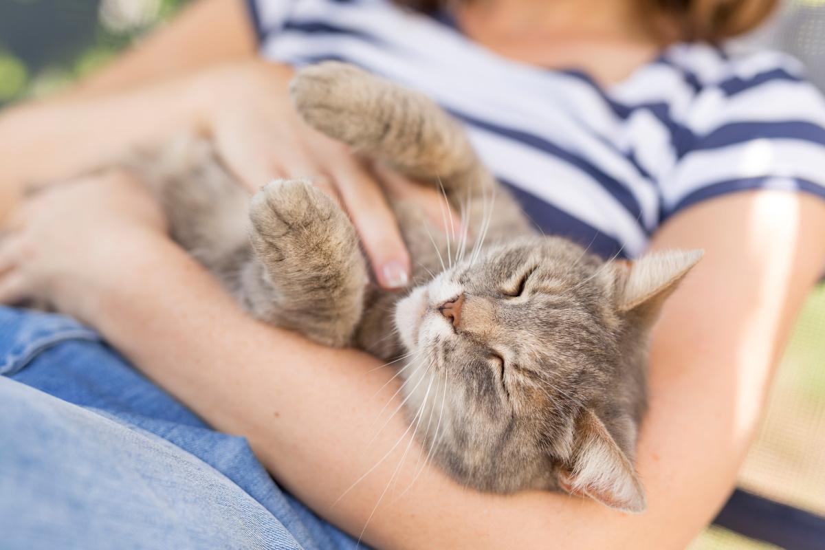 Coccolatori di gatti