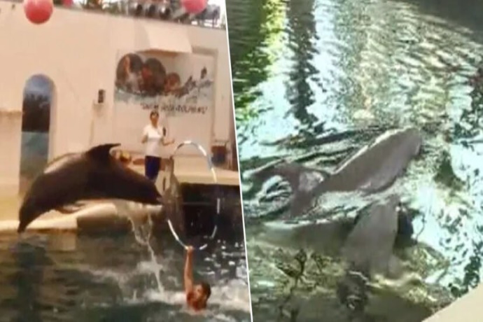 Delfini Bulgaria