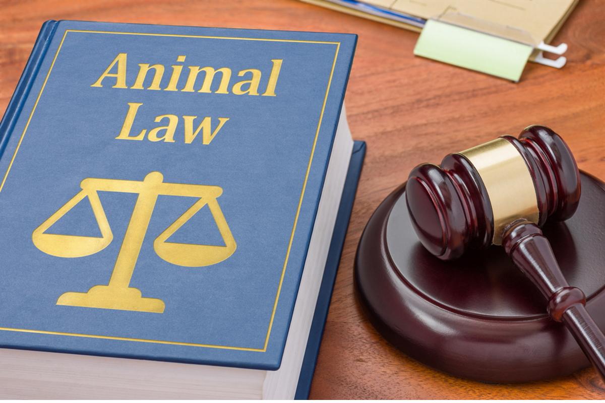 difesa animali