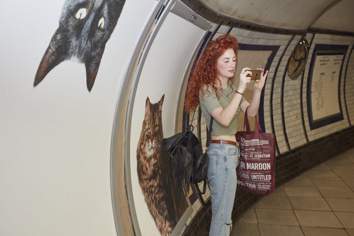 Fermata metro con gatti
