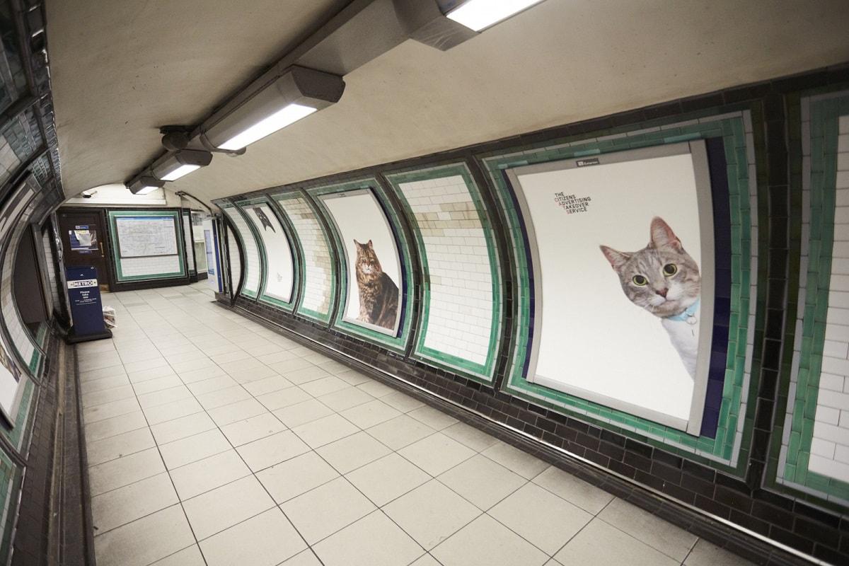 Gatti metro a Londra