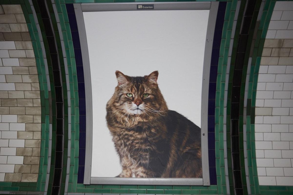 Gatto nella metro