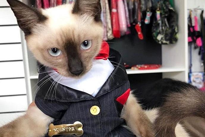 Gatto avvocato