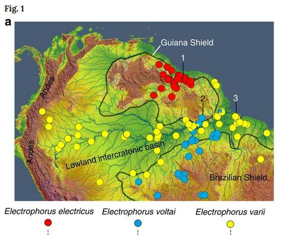 Pesci elettrici Amazzonia