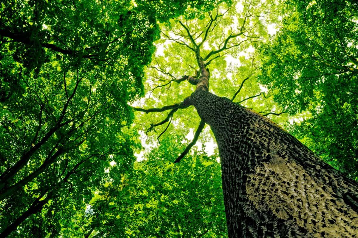 Piantare alberi Irlanda