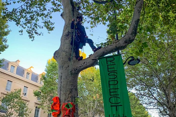 Protesta su un albero in Francia