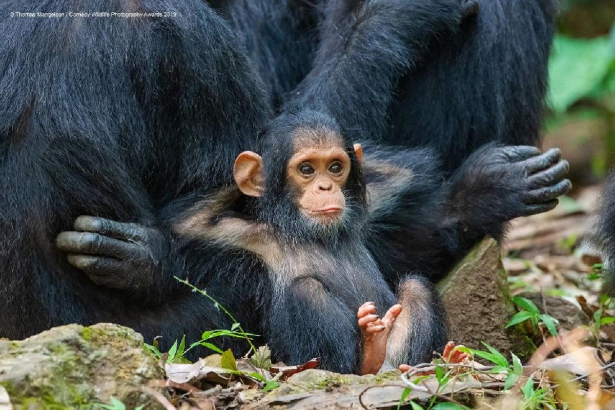 Scimmia foto finaliste