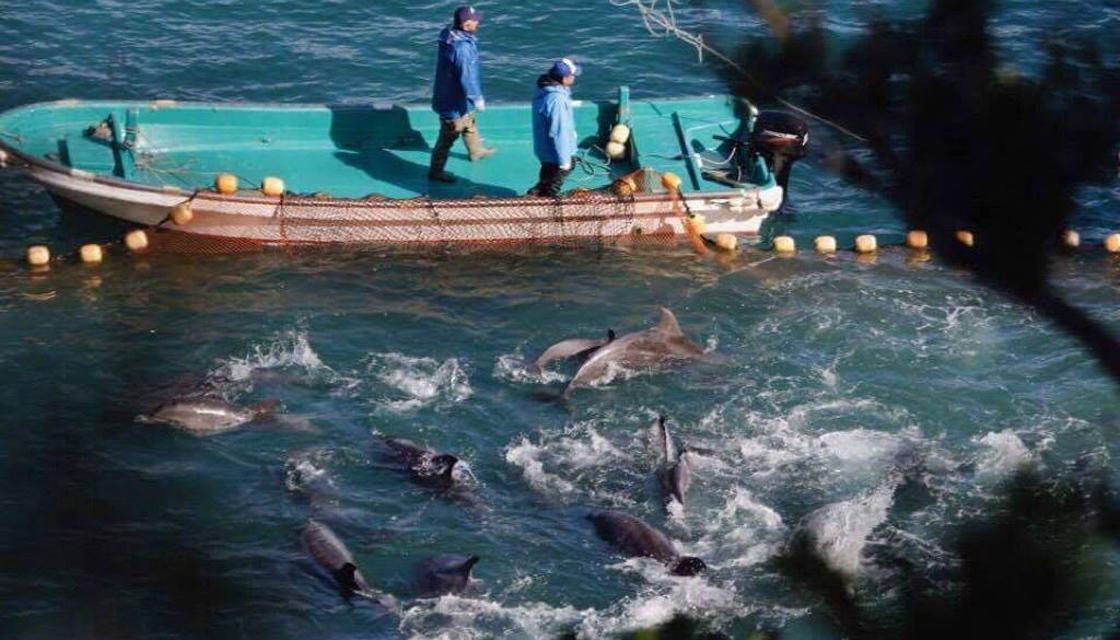 delfini-taiji