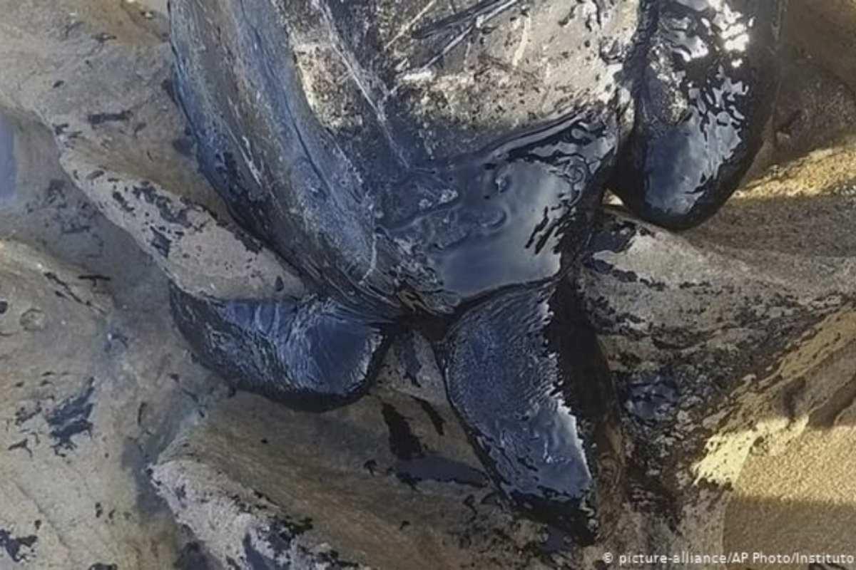 tartaruga petrolio brasile