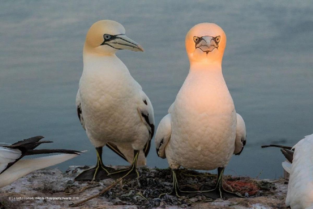 Uccelli foto