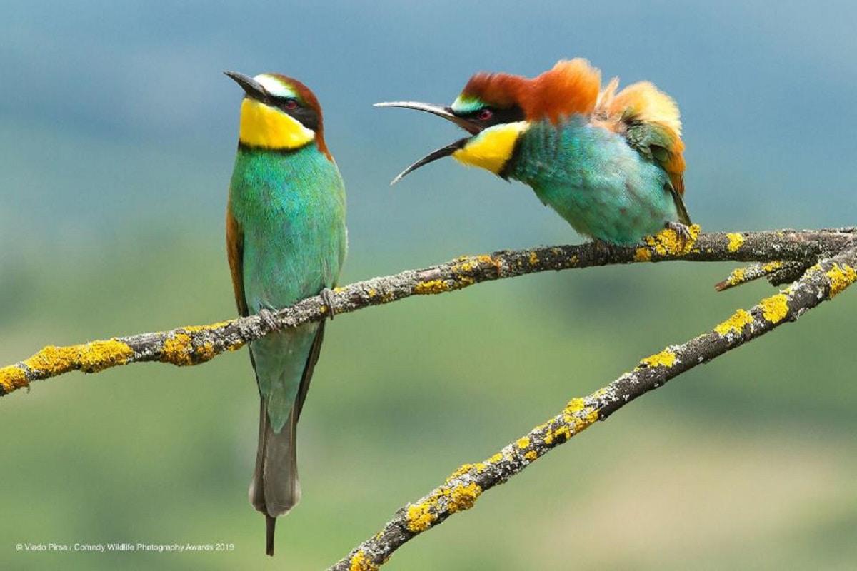 Foto uccelli