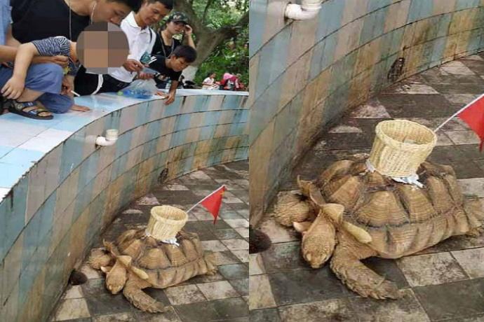 Tartaruga bersaglio
