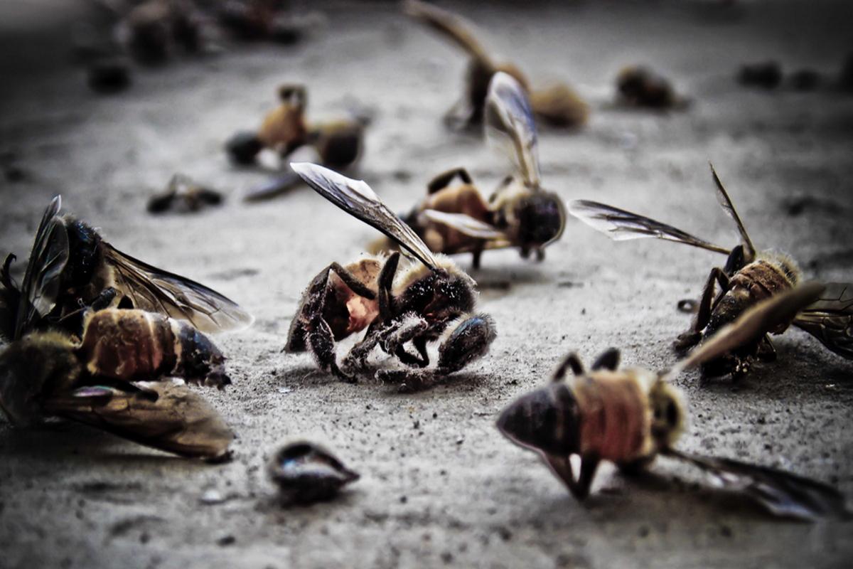 api glifosato