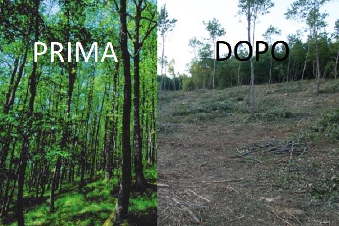 bosco prima e dopo