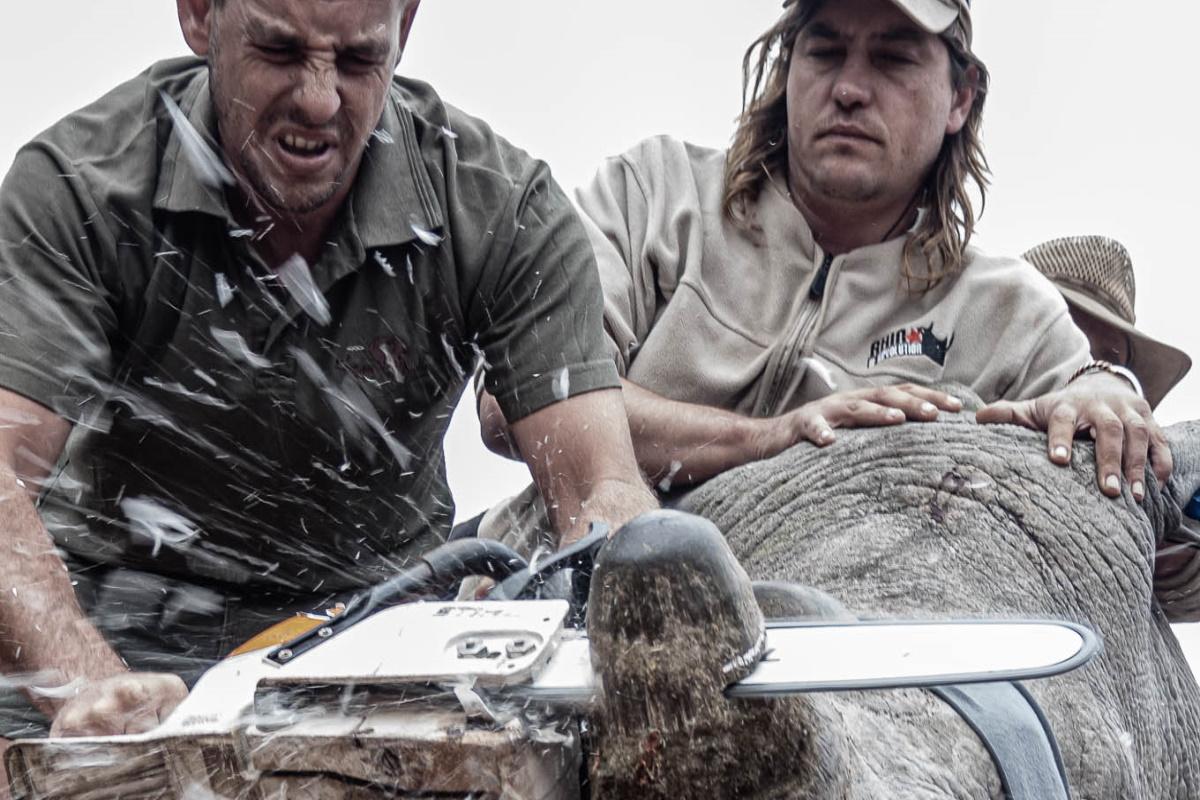 Taglio corno rinoceronte