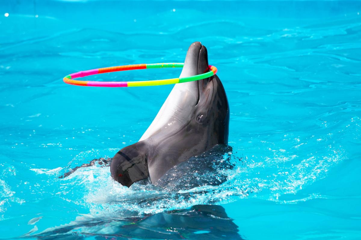delfino-cattivita