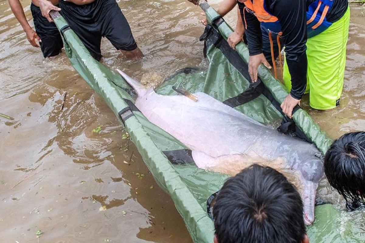 delfini contaminati dal mercurio