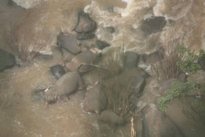 Elefanti morti in Thailandia