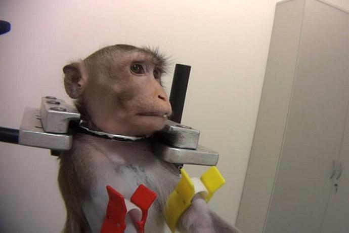 Macaco sperimentazione