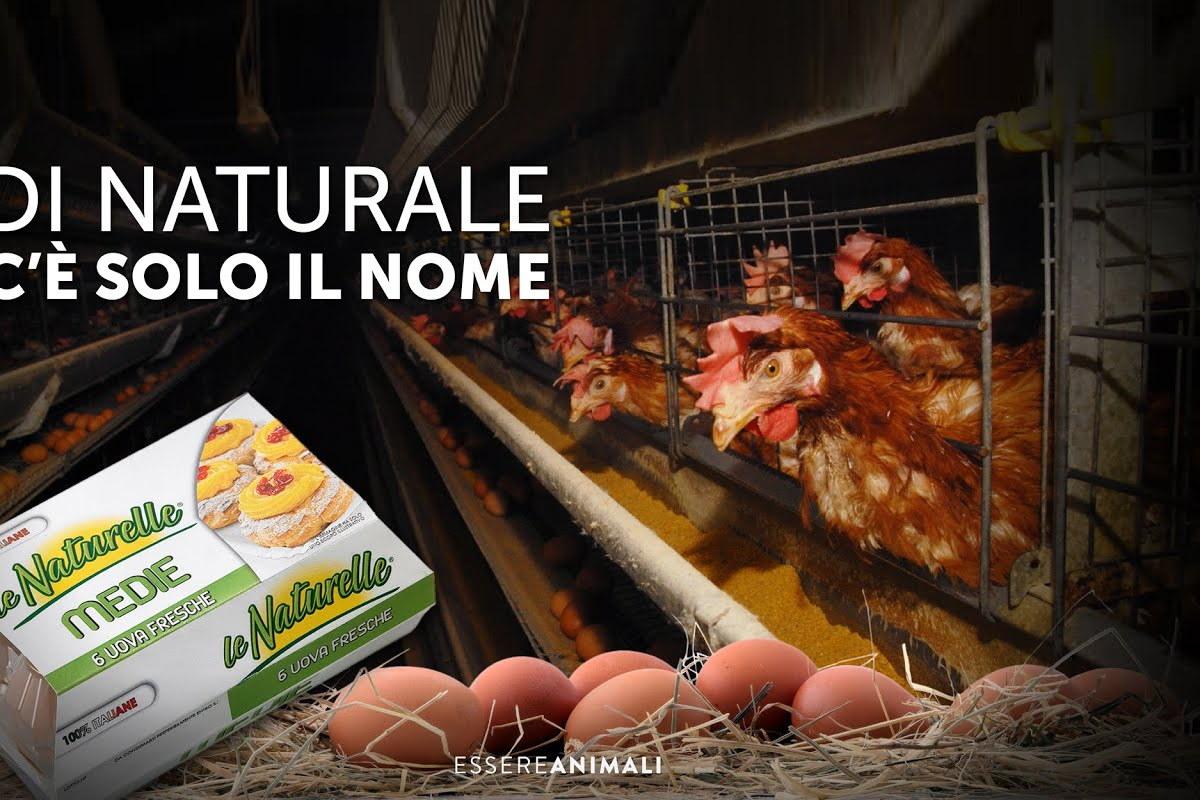 naturelle-inchiesta-essere-animali
