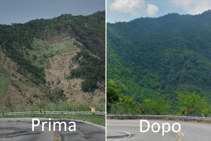 Riforestazione Brasile