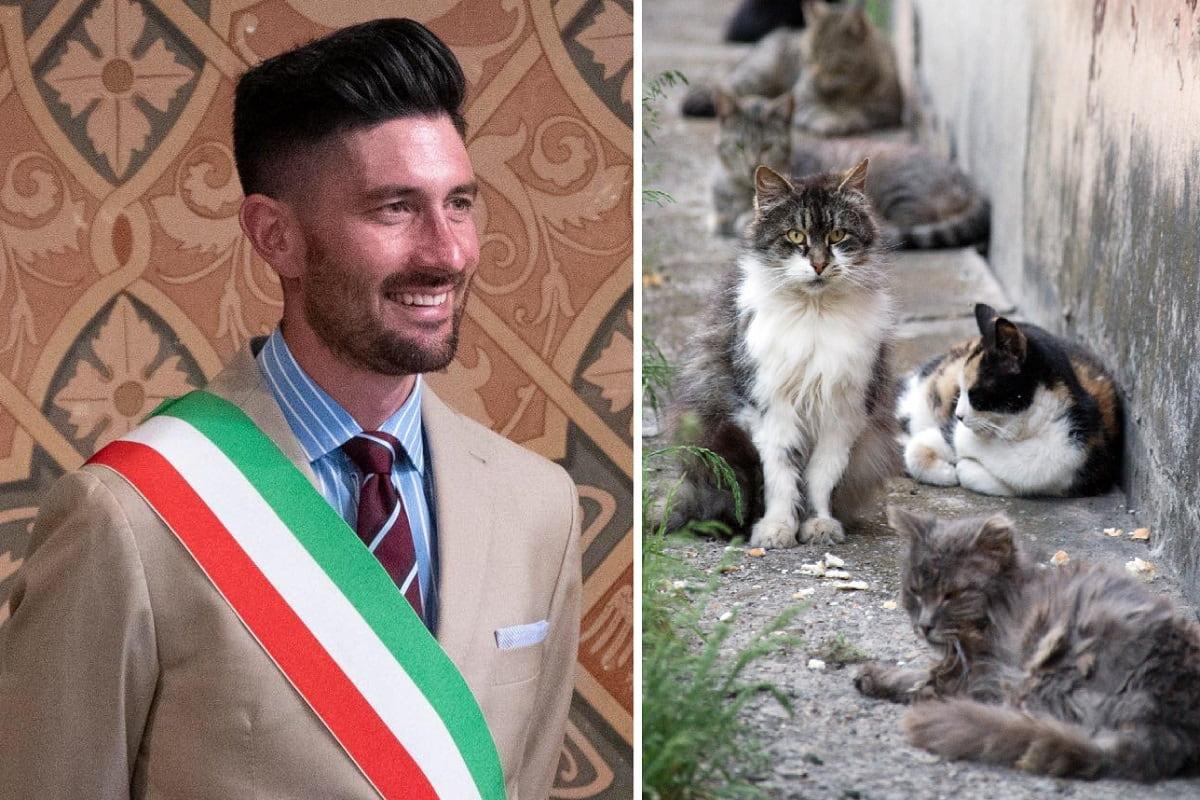 Gatti senza casa, li ospita il sindaco