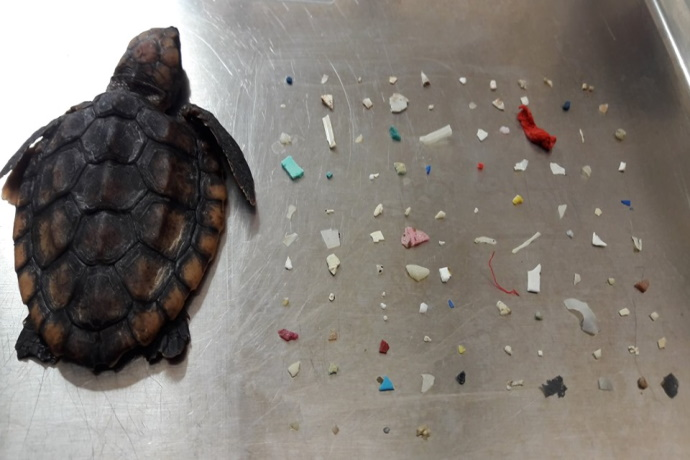Tartaruga uccisa dalla plastica