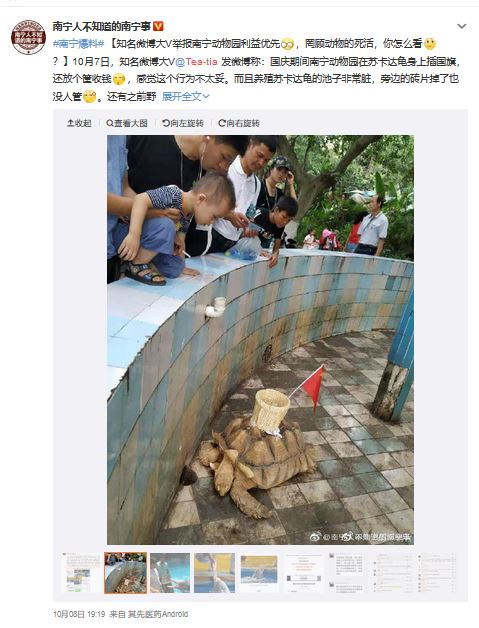 Tartaruga zoo cinese