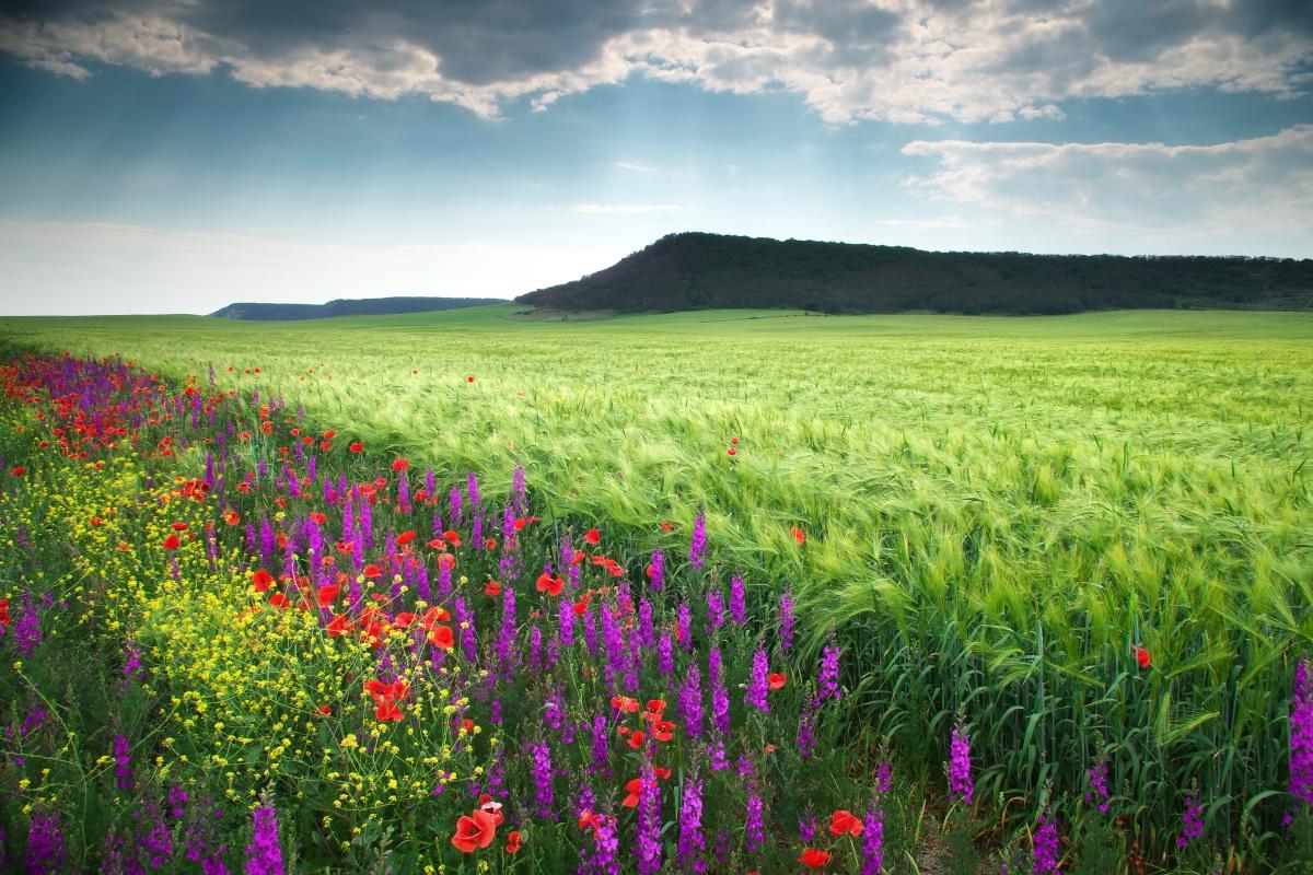 Biodiversità in agricoltura