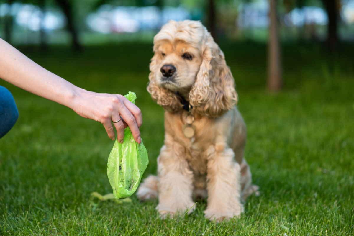 cacca cane